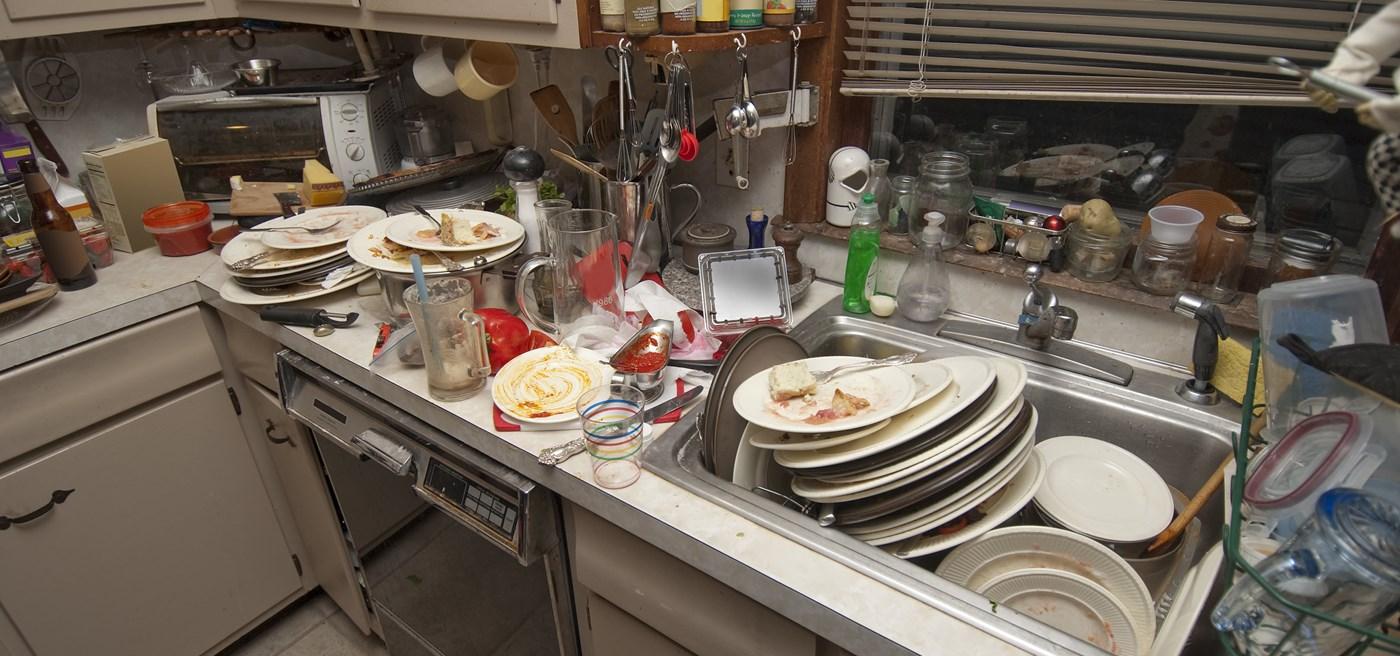 Maggots In The Kitchen Sink