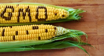 Do Genetically Modified Crops Really Increase Yields?