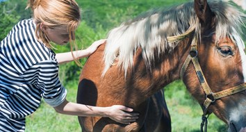 This State Thinks You Should Go to Jail for Massaging a Horse without a License