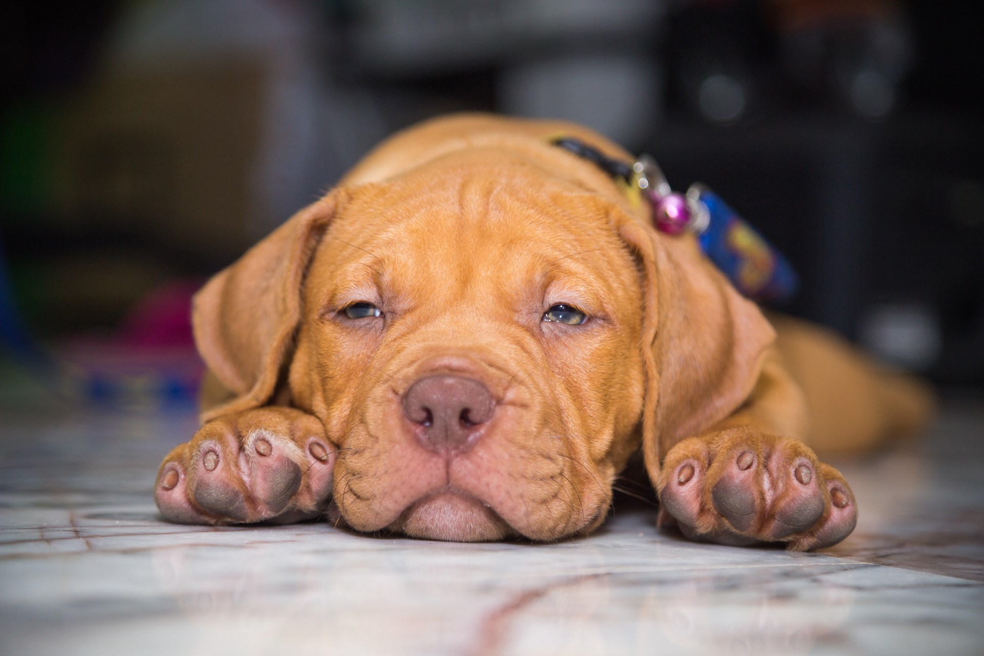 Breed Bans Are Cruel and Don't Even Work - Foundation for