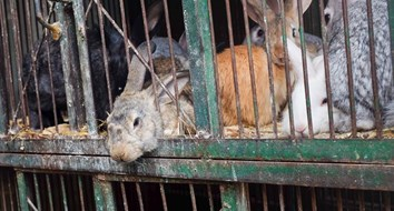 Rabbits Won't Save Venezuela from Going Hungry