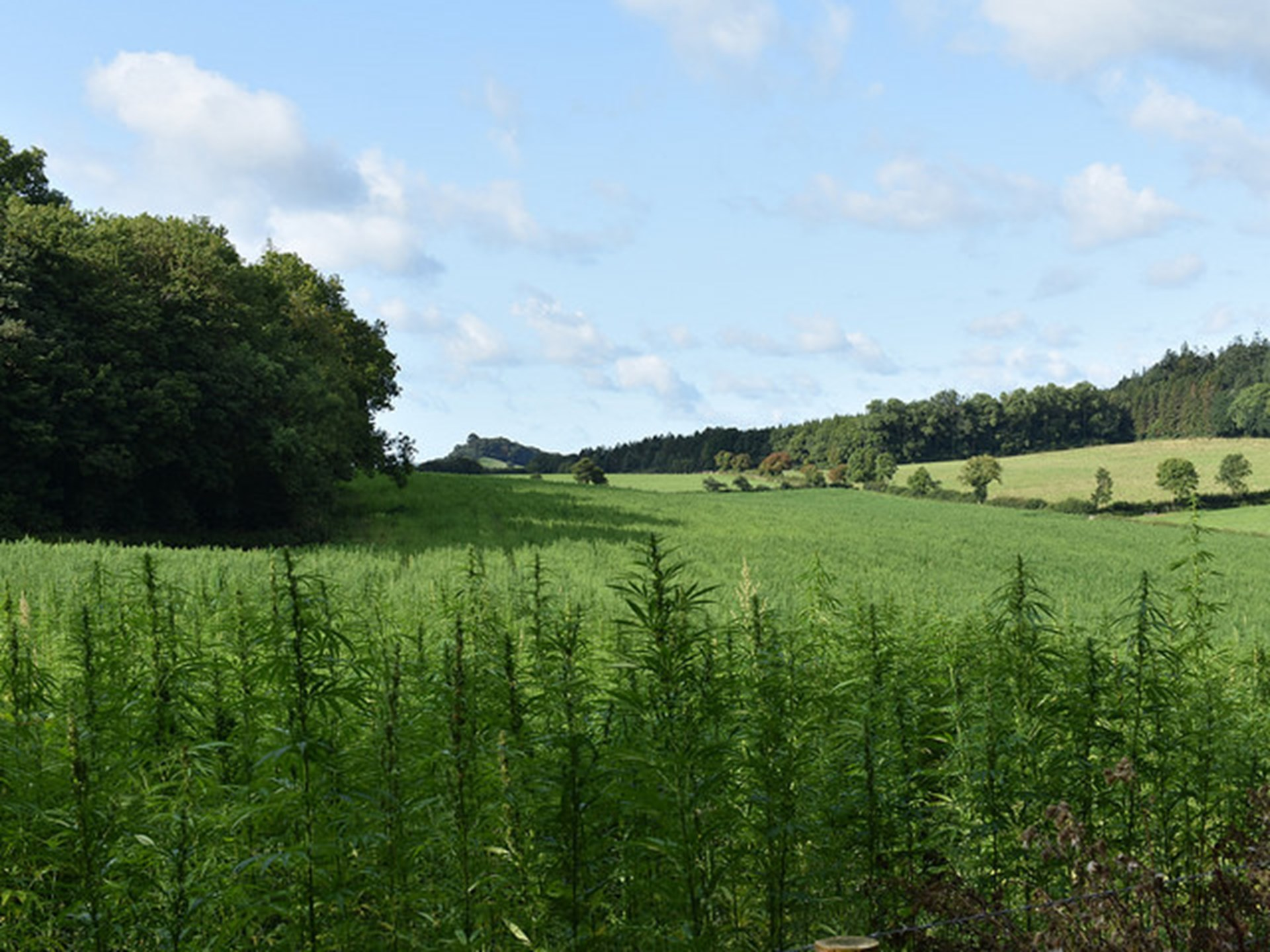 Government Goes from Banning Hemp Farming to Subsidizing It