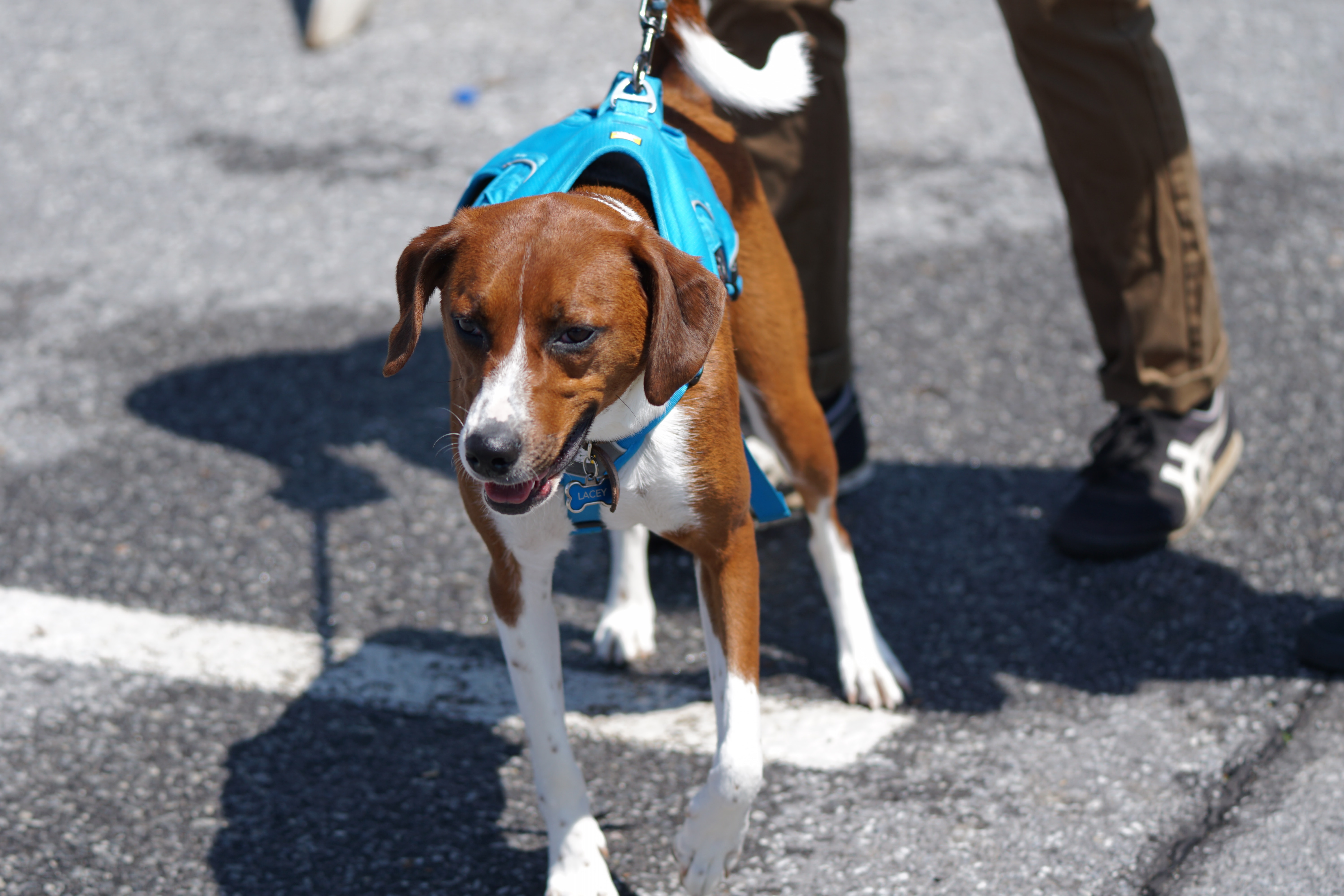 The FDA's Dog Food Investigation Needs to Be Put on a Leash