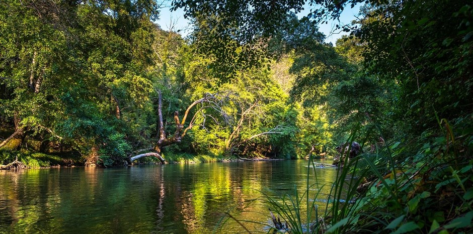 How Property Rights Can Help Preserve the Amazon Rainforest