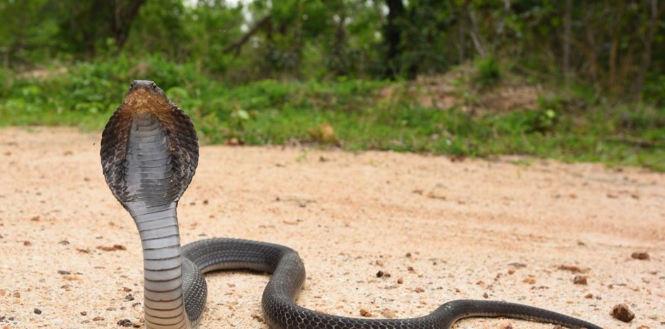 The Cobra Effect: Lessons in Unintended Consequences   Antony Davies, James R. Harrigan