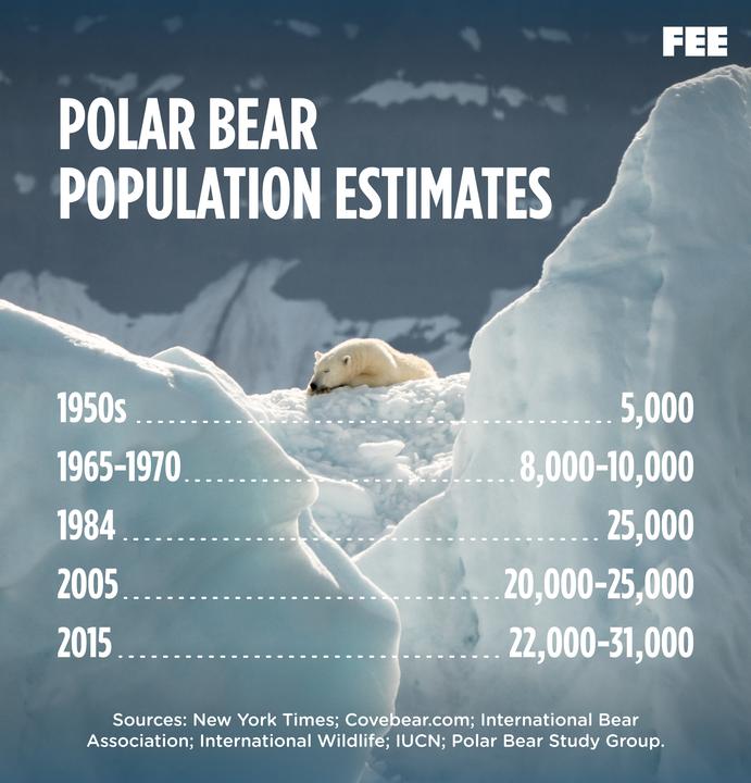 Polar Bear Poplulation Chart