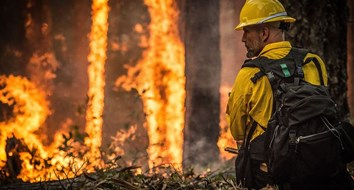 Why There Are So Many Wildfires in California, but Few in the Southeastern United States